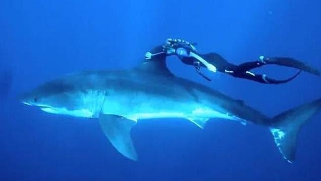 'Shark whisperer' ... Ocean Ramsey. Picture: Supplied