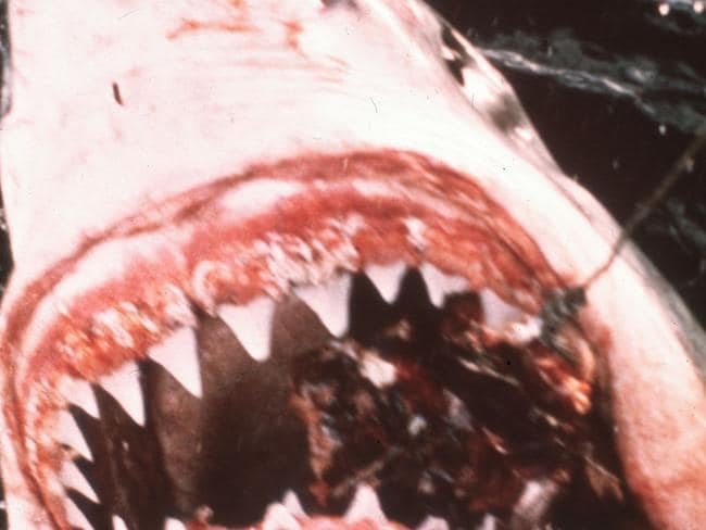 1975 was all about Jaws.