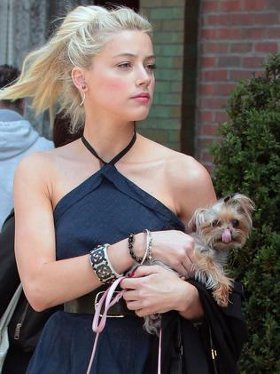 Amber Heard in New York City with her dog.