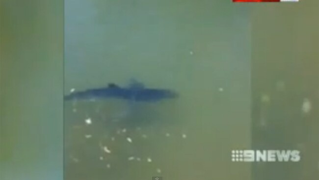 The shark was later found in a creek. Picture: Channel 9
