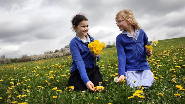 In their honour ... children at Harefield Junior School pick flowers for the graves of Anzac soldiers. Picture: Ella Pellegrini