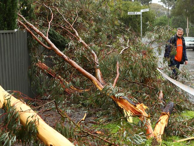 Lightning strikes a tree outside Gary Altman's home in Myrtle Bank, Adelaide. Picture: Tait Schmaal