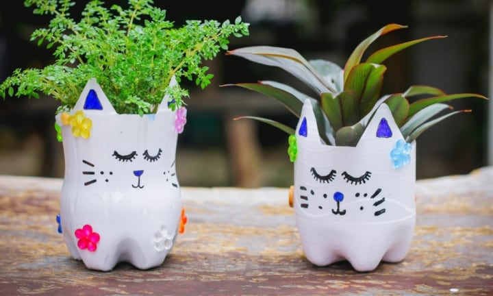 How to make your own DIY Kitty Planters