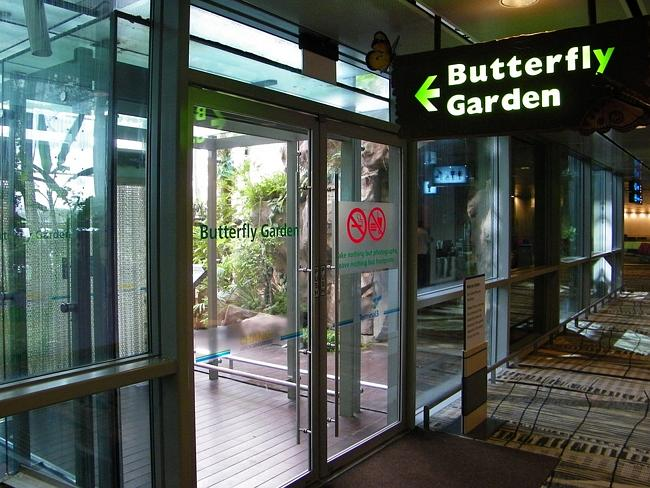 The Butterfly Garden at Changi International Airport. Picture: Michael — Spencer