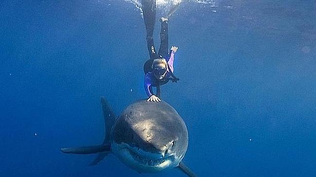 The first shark was killed on Australia Day. Picture: Supplied