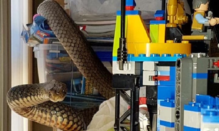 Gold Coast mum gets shock of a lifetime when she finds deadly snake in lego
