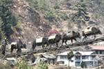 <strong>NEPAL, ASIA</strong>  <p>Yaks walk through a suspension bridge at Namche Bazaar in Nepal</p>  <p>Picture: Reuters</p>