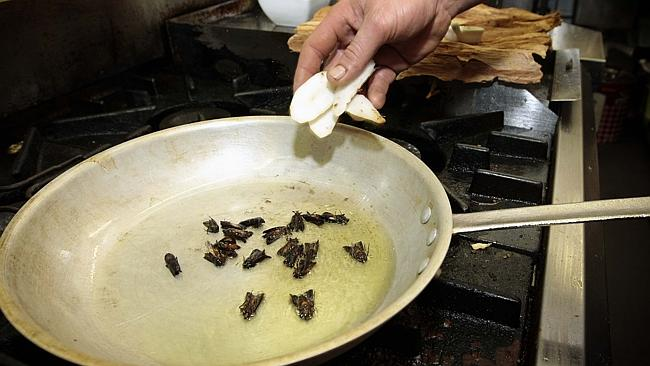 """Chef Kurt Gruber from Canberra's Ironbark Cafe cooks up """"Brandy Flamed Bogong Moth Frittata"""". Cos he can."""