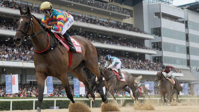 Trainer Peter Wolsley eyes Korean Derby with Royal Ruby