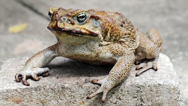 What To Do If Dog Gets Poisoned By Toad