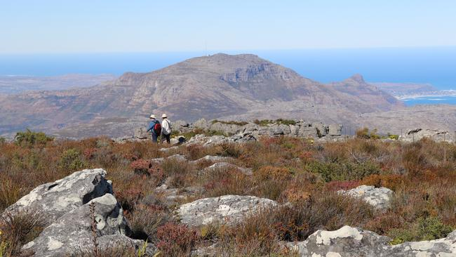Table Mountain in Cape Town, South Africa attracts almost one million tourists each year. Picture: Megan Palin.