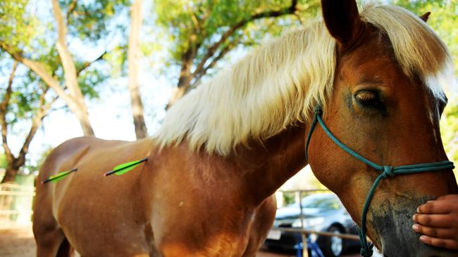 Pearly, the much-loved mare, was shot with two crossbow bolts and eventually succumbed to her injuries. Picture: Justin Kennedy