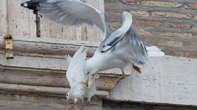 Pope Francis had appealed for peace to prevail in Ukraine before releasing the doves which were attacked. Picture: AP