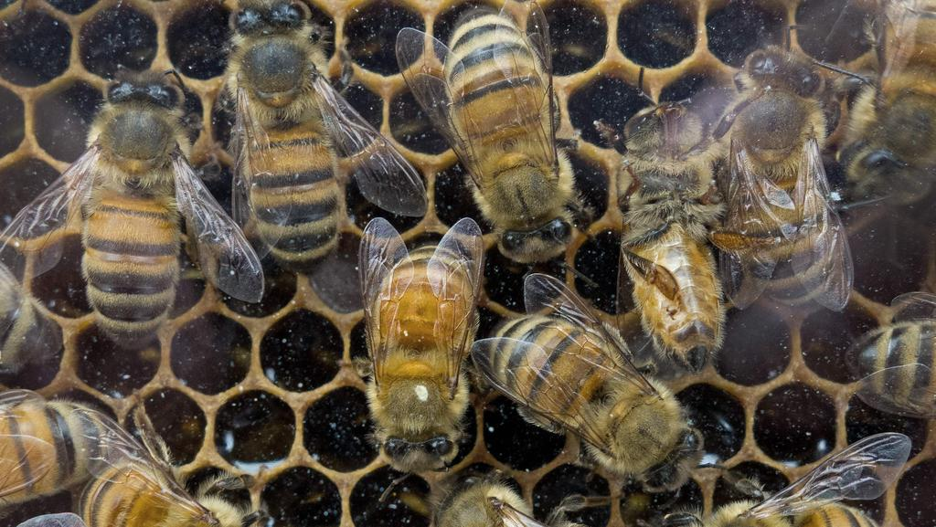 Study finds 75 per cent of honey samples contained a key pesticide. Picture: Paul J. Richards