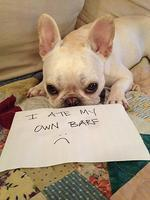 "<span>A new blog has popped up for all the dog-lovers out there - they'll know exactly what these people are talking about</span>  <p><span>Shame on you!. Picture:</span> <span><a href=""http://dogshaming.tumblr.com/"">Dog Shaming</a> <br /> </span></p>"