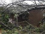 A huge pine tree fell on this Crafers house after Thursday night's wild weather, crushing the shed. Picture: Roger Wyman