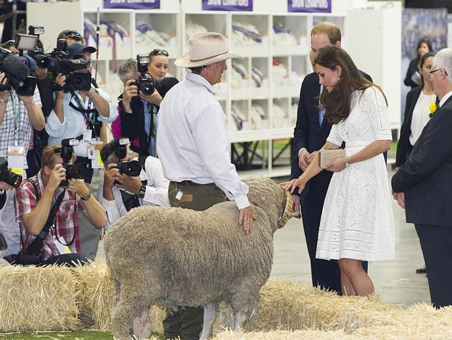 Wills and Kate visit Fred, a super fine wool Marino from Wellington.