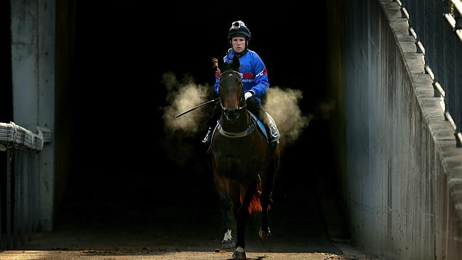 Jockey Nathan Berry on ECOSTANATI returns from their 2nd placing in Heat 3 of the BArrier Trials at Warwick Farm Racecourse, Warwick Farm .