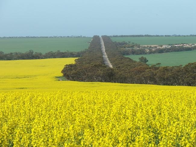 <b>11. ARDROSSAN, SA: </b>Canola and wheat fields, and Mother Nature at its best, near Ardrossan on the east coast of the Yorke Peninsula. Picture: Peter Bain, SA