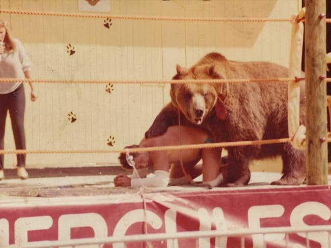 Untamed when brought home ... Hercules the brown bear gets hold of Andy Robin in the ring as Maggie looks on. Picture: Supplied