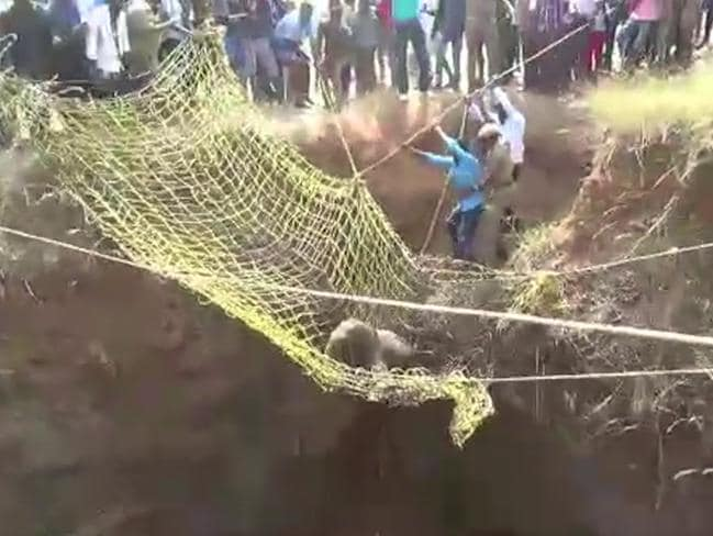 After unsuccessfully trying to rescue the calf using ropes, the locals worked together with a huge net and rescued the three-month-old. Picture: Caters News.