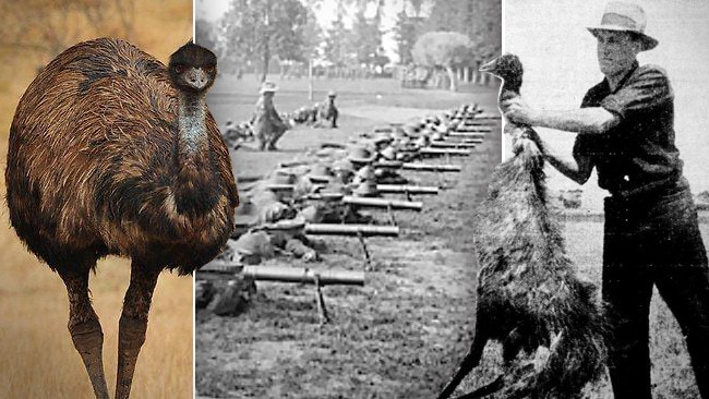 Dunk Island Holidays: Australian Emu War: Soldiers In 1932 Used Machine Guns To