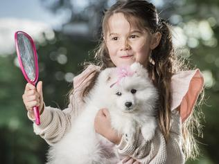 Dog Owners to Learn Grooming