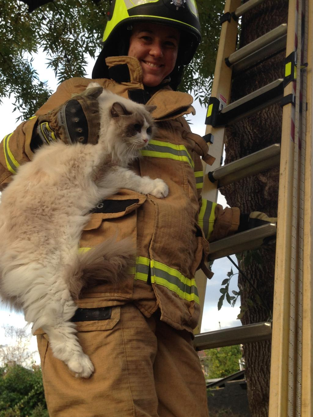 New Firefighter Rescues Cat From Tree In Windsor On First