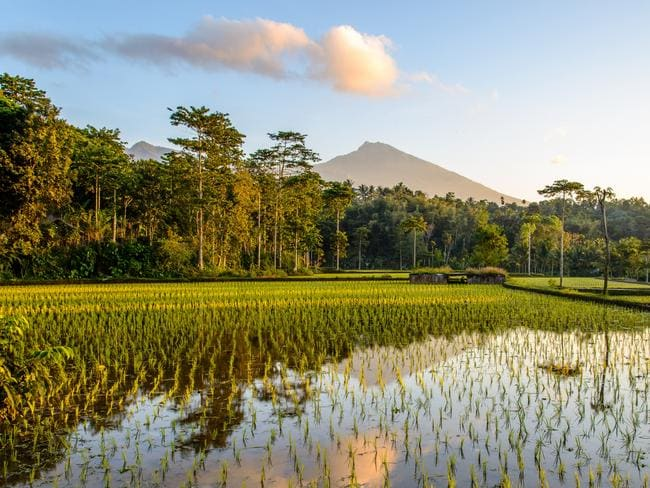 Lombok rice paddies. Picture: Intrepid Travel