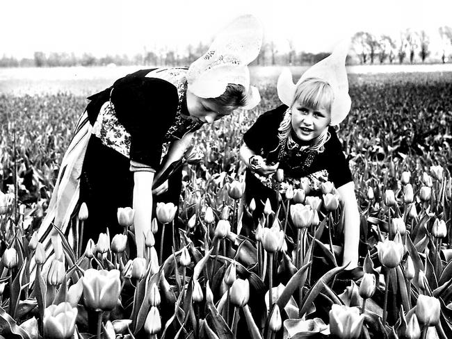 A mother and daughter among tulips growing in Holland.