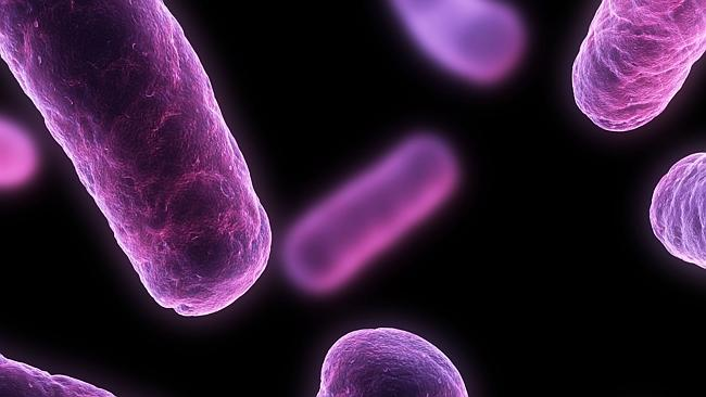 Superbug epidemic ... health experts say bacteria is adapting and can't be curbed by existing drugs. Picture: Thinkstock