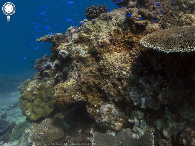 Google ReefView: explore the world's coral reefs with Google Street View. Photo: Google