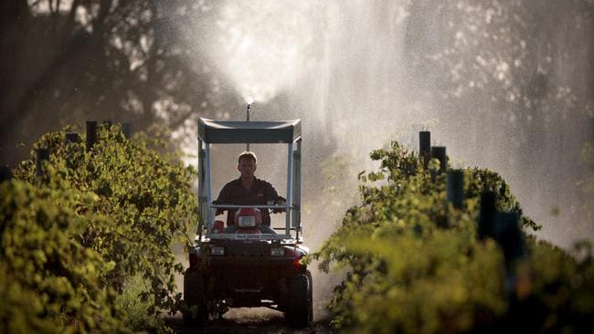 A working vineyard: Wirra Wirra offers visitors a chance to see what happens behind the scenes.