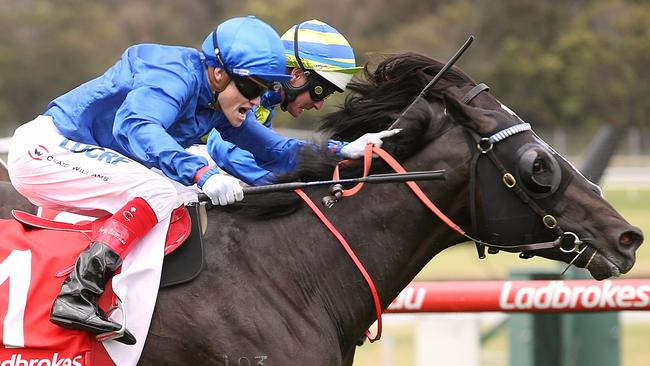Morton's Fork will among a strong Godolphin team at Rosehill on Saturday. Picture: Wayne Ludbey