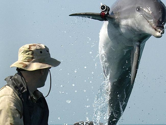 Sergeant Andrew Garrett watches K-Dog, a bottle nose dolphin, while training near the USS Gunston Hall in the Persian Gulf on March 18, 2003. Picture: AP Photo/ U.S. Navy, Brien Aho
