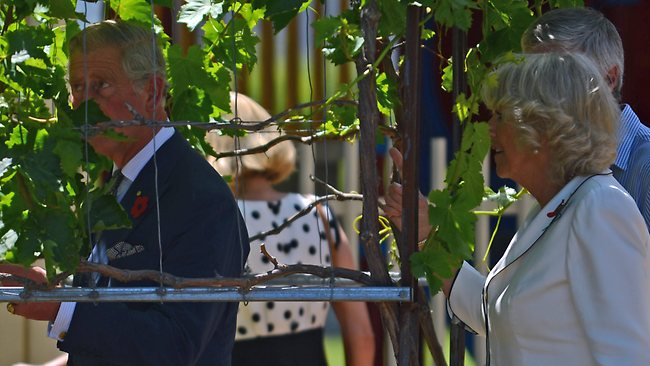 The Prince of Wales and the Duchess of Cornwall visit Kilkenny Primary School. Prince Charles and Camilla walk through some vines at the school Picture: Luke Hemer