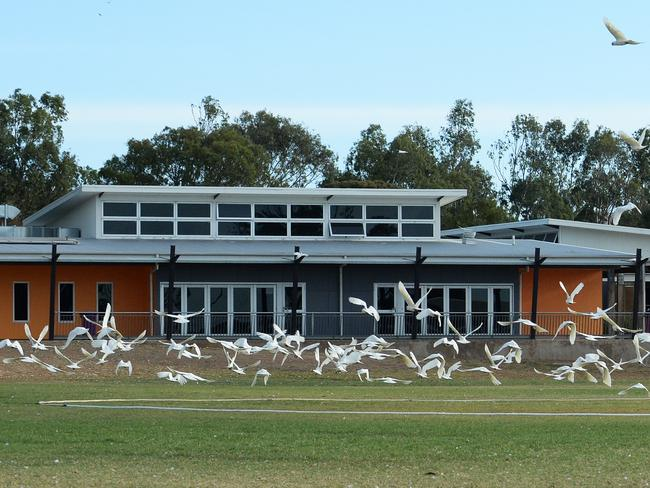 20/02/15. Corellas are damaging the buildings and grounds at Willunga High School. Pic. Noelle Bobrige