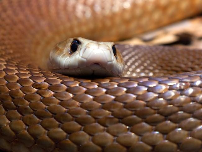 Double the number of people have been hospitalised due to bee stings compared to snake bites. Picture: Darren Patterson