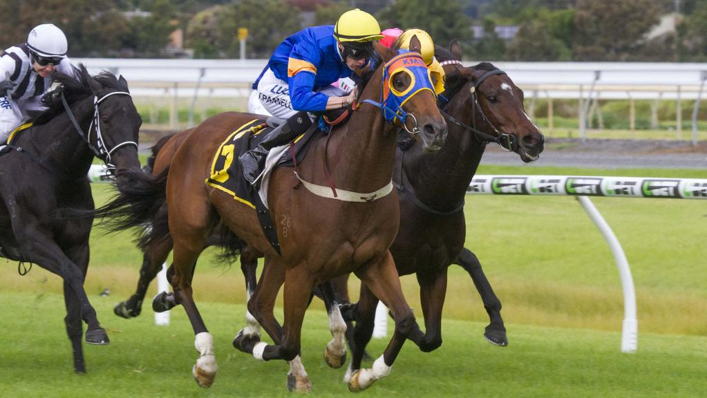 Riziz wins at Morphettville. Picture: Atkins Photography