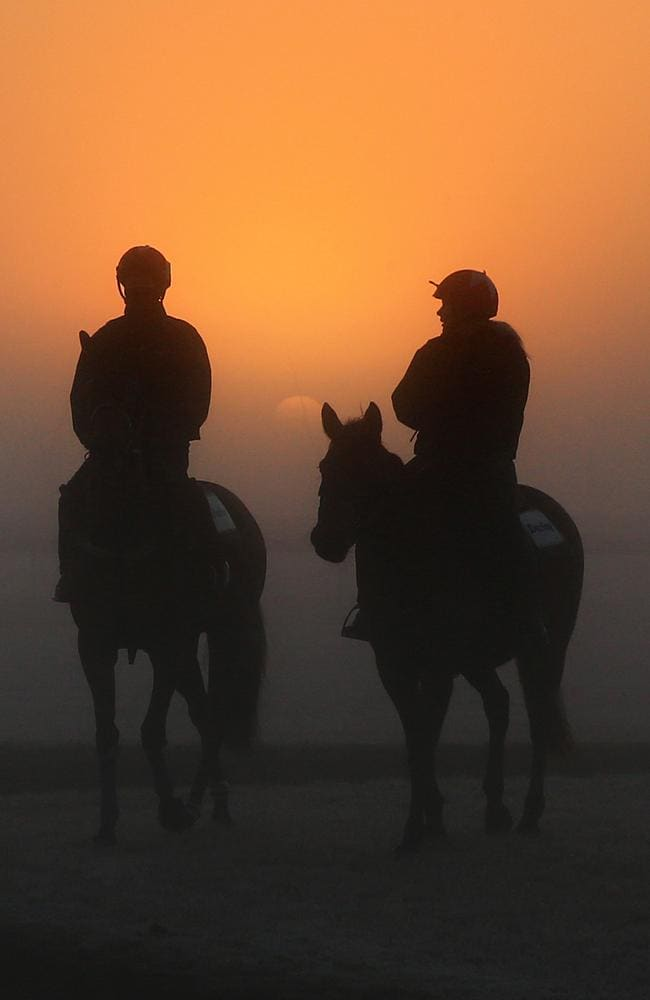 Despite the mercury plummeting to three degrees below zero, horses at Darley's Osborne Park property are put through their paces at trackwork. Picture: Mark Evans