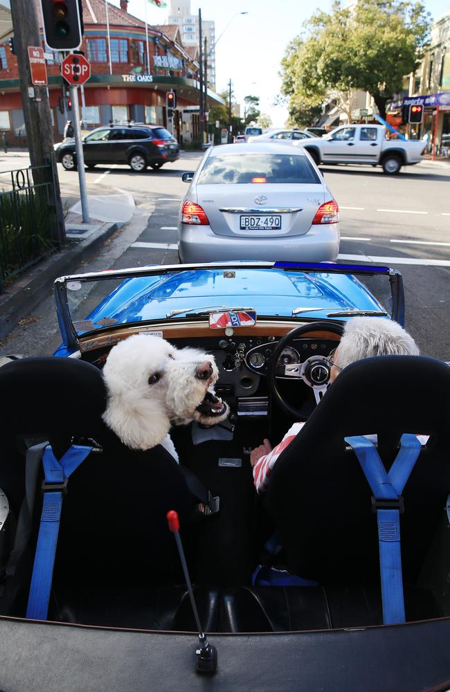 Don't get too close ... Freddie is protective of his owner's vintage wheels. Picture: Toby Zerna