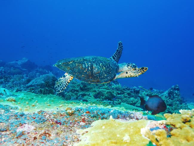 Bali's waters are an aquatic playground. Picture: iStock