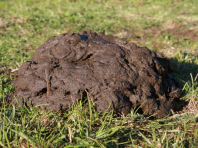 A man has been jailed because of his fetish for cow dung.