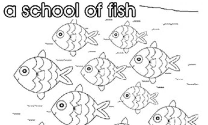 Collective nouns: A school of fish