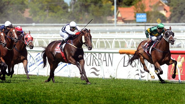Dwayne Dunn pushes Foreteller home along the rails on his way to riding a treble. Picture: Wayne Ludbey