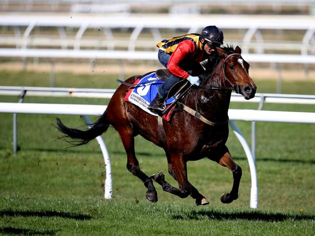 Soosa Rama, ridden by Damien Oliver, takes part in the Cranbourne trials. Picture: Tim Carrafa