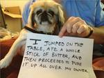"<span>No buts about it, this is bad. Picture:</span>  <span><a href=""http://dogshaming.tumblr.com/"">Dog Shaming</a> <br /> </span>"