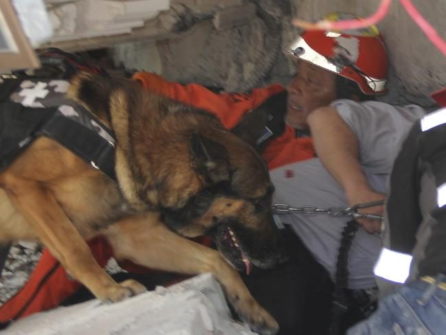 Rescue workers and a trained dog search for children trapped inside the collapsed Enrique Rebsamen school in Mexico City. Picture: AP