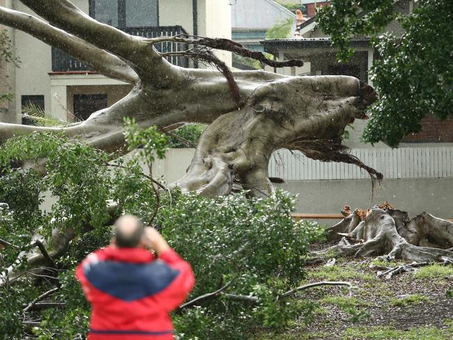 The Rozelle tree crushed a couple of cars. Picture: Rohan Kelly