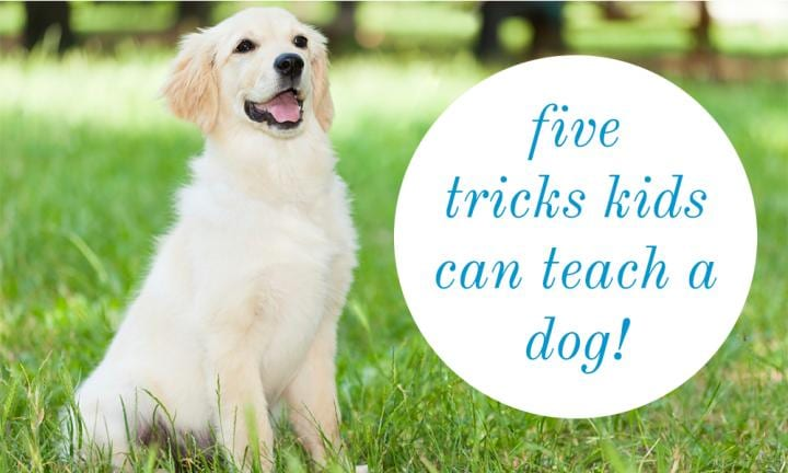 5 tricks kids can teach a dog